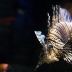 Solo se conoce el impacto ecológico del 6% de las especies exóticas invasoras marinas