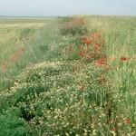 Dejar lindes en los campos de cultivo mejora la producción agrícola y la biodiversidad