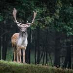 Científicos piden en un manifiesto el reconocimiento de derechos para la naturaleza