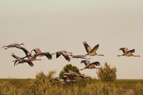 España es el segundo país europeo con mayor variedad de aves