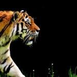 Un millón de especies en peligro de extinción