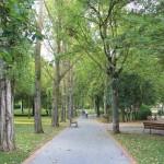 Un estudio refleja los beneficios del arbolado urbano de Vitoria-Gasteiz