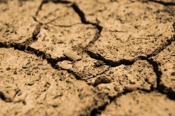 El cambio climático frena la descomposición de nutrientes, según un estudio