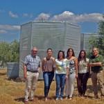 El cambio climático podría reducir la cosecha de aceituna