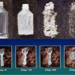 Uno de los nuevos plásticos biodegradables, nocivo para los ecosistemas acuáticos