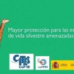 La COP 18 adopta medidas de conservación para la jirafa y los buitres africanos