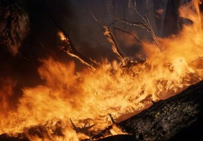 Incendio forestal. Foto: Pixabay