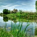 La ZEPA (Zona de Especial Protección para Aves) Azud de Badajoz