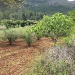 Proyecto Corta Fuegos Verdes