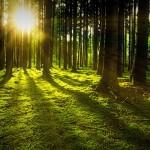 """Descubren que los árboles """"aprenden"""" a adaptarse a la crisis climática"""