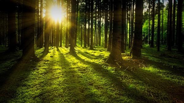 Descubren que los árboles aprenden a adaptarse a la crisis climática