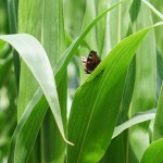 Los campos con mayor biodiversidad producen mejores cultivos