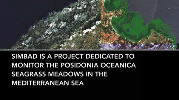 Desarrollan un sistema para mapear la posidonia desde el espacio