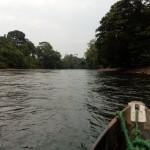 Amazonas, origen de paradojas para especialistas en Medio Ambiente