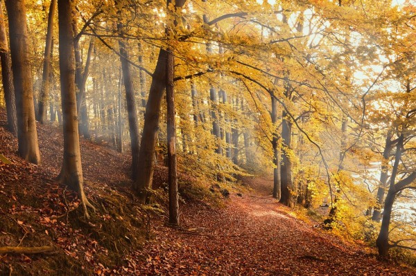 bosques retienen menos carbono