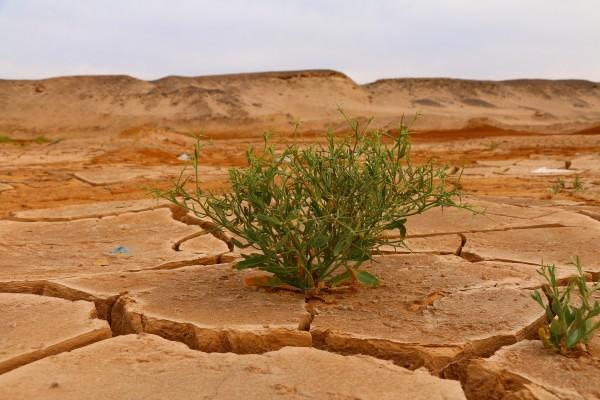 informe emergencia climatica en españa