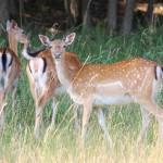 La Fundación BBVA entrega sus Premios a la Conservación de la Biodiversidad