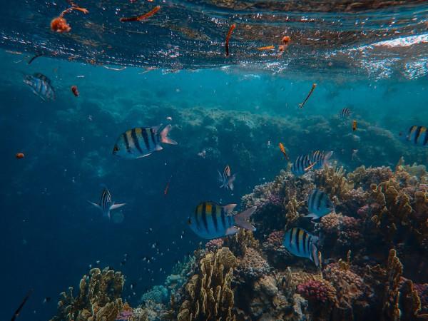areas marinas protegidas