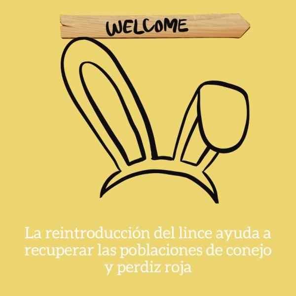reintroduccion del lince conejos