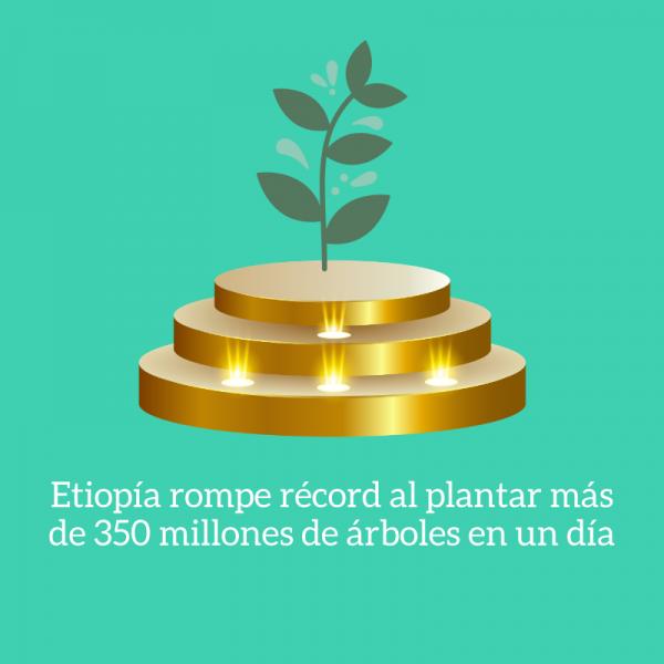 etiopia nuevo record plantacion