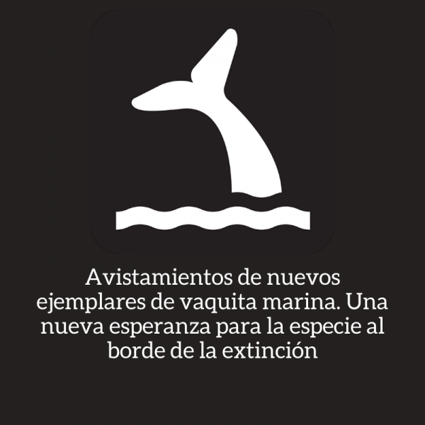vaquita marina extincion