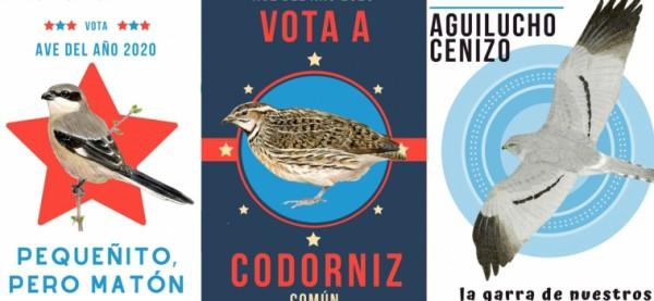 votacion ave del año