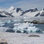 El calentamiento y el incremento de actividad humana facilitan la llegada de las especies invasoras a la Antártida