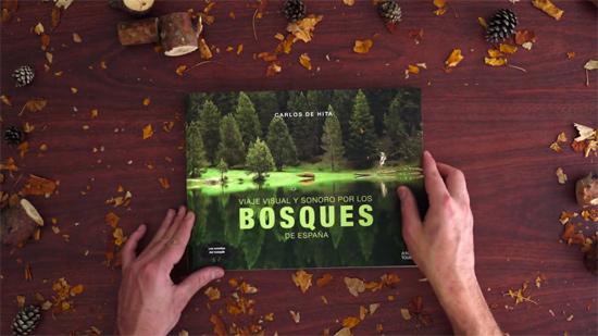 bosque-sonoro