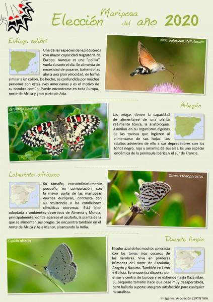 eleccion mariposa del año