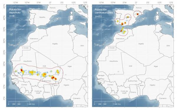 Áreas-invernada-cigüeñas-de-España-y-centroeuropa