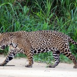 Resultados de la COP13 a las puertas del día Mundial de la Naturaleza