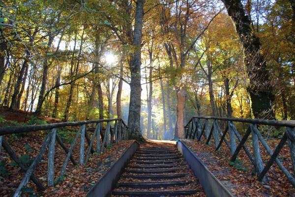 escalera al bosque