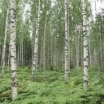 Los árboles que viven en bosques con mayor número de especies, aprovechan mejor los recursos
