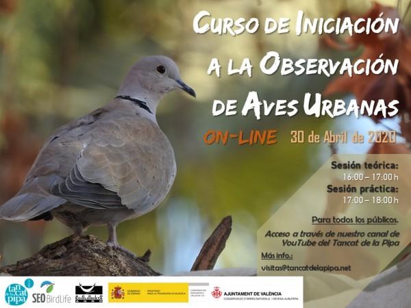 curso iniciacion aves urbana