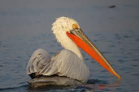 Rumanía SEO BirdLife