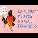 La migración de aves, un viaje peligroso