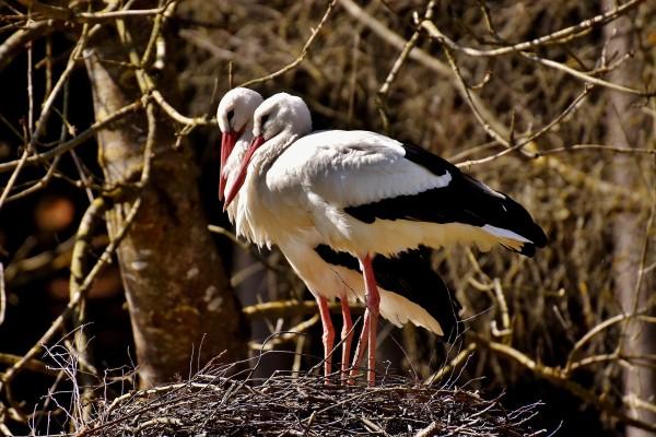 aves migratorias declive