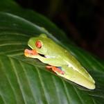 Nuevo control en frontera para luchar contra la entrada de especies exóticas invasoras de animales y plantas