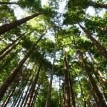 Agenda de Ocio Ambiental del 5 al 7 de junio