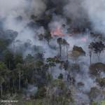 La Amazonía brasileña pierde 10.129 kilómetros cuadrados de selva en 2019, la mayor en once años