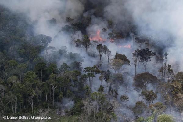 amazonas greenpeace