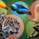 Experiencia interactiva en la Amazonía