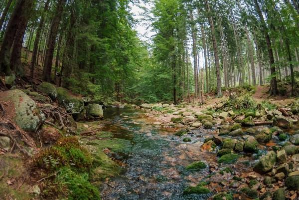 bosques europa