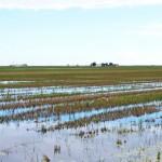 Un estudio alerta que la salinización del suelo amenaza la agricultura de todo el planeta