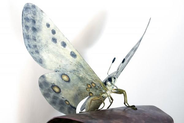 esculturasinvertebrados
