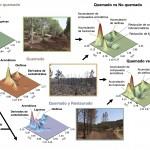 Los procesos de restauración del suelo quemado no logran recuperar a corto plazo su composición original