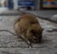 Los-cambios-en-el-uso-de-la-tierra-aumentan-el-riesgo-de-brotes-de-enfermedades-zoonoticas