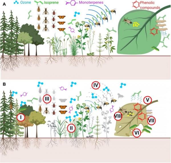 efecto del ozono en la biodiversidad