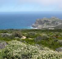 Región Florística del Cabo en Sudáfrica