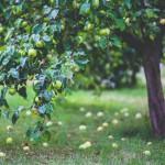 Calendario de siembra: ¿Cuál es el momento óptimo para sembrar?